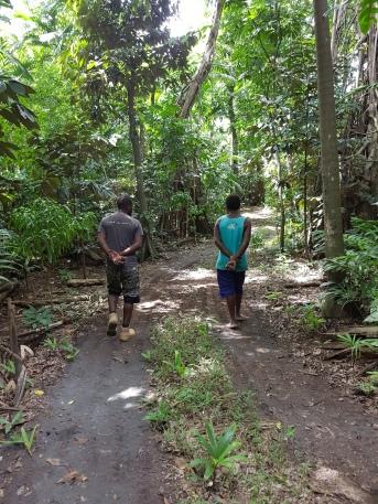 Guided jungle trek